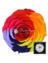 Trandafir Criogenat Multicolor Rosu XXLRaRed02