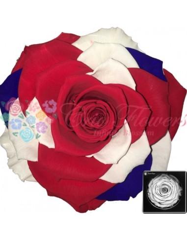 Bonita Flag United Kingdom