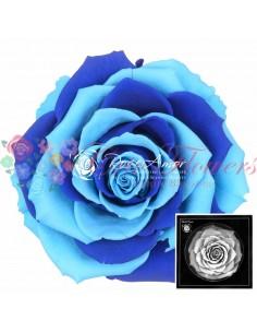 Bonita Rainbow Blu01 Blu03