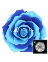 Trandafir Criogenat Bicolor Albastru BonitaBlue