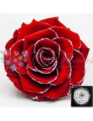 Bonita Glitter Silver Red02