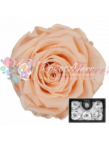 Trandafiri Criogenati Somon XLPea99