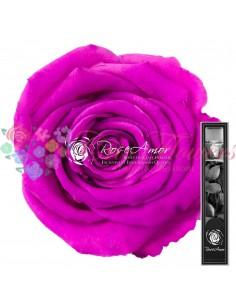 Trandafir Criogenat Tija Fucsia 30cmBic05