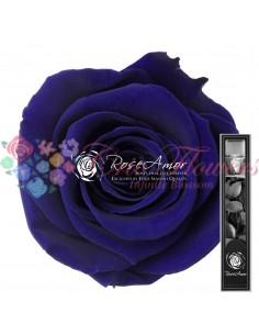 Trandafir Criogenat Tija Albastru 30cmBlu03
