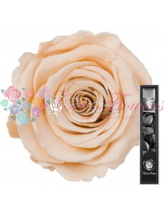 Trandafir Criogenat Tija Crem 30cmCha01
