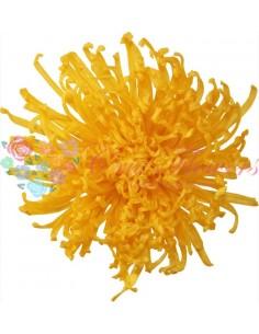 Crizantema Anastasia Criogenata Galben