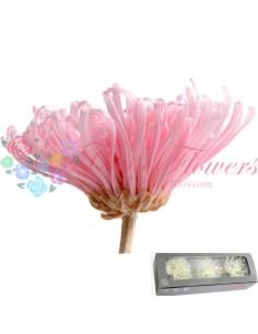 Crizantema Anastasia Criogenata Roz