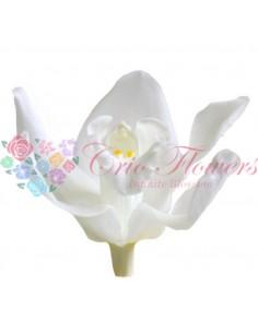 Orhidee Criogenata Alb Per3