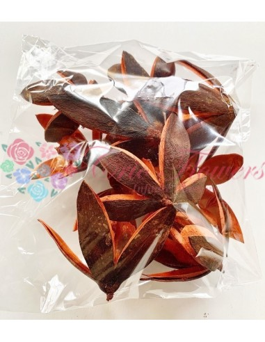 Wild Lily Portocaliu