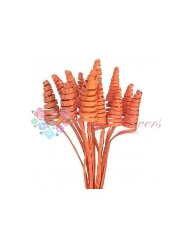 Cane Cone Mini Alb