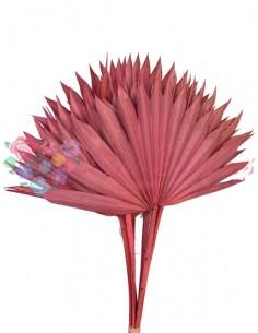 Frunze Palmier Soare Roz