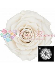 Trandafiri Criogenati Alb BonitaWhi04