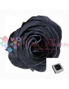 Preserved Special Black