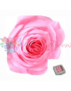 Preserved Special Bridal Pink