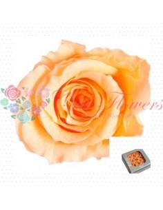 Preserved Special Peach