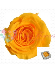 Preserved Special Warm Yellow