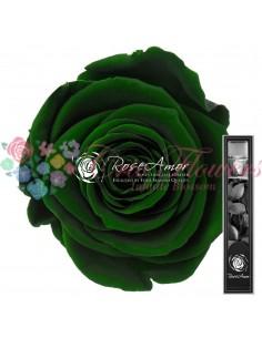 Trandafir Criogenat Tija Verde 30cmGre02