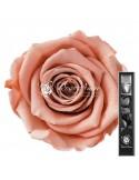 Trandafir Criogenat Tija Somon 30cmPea01