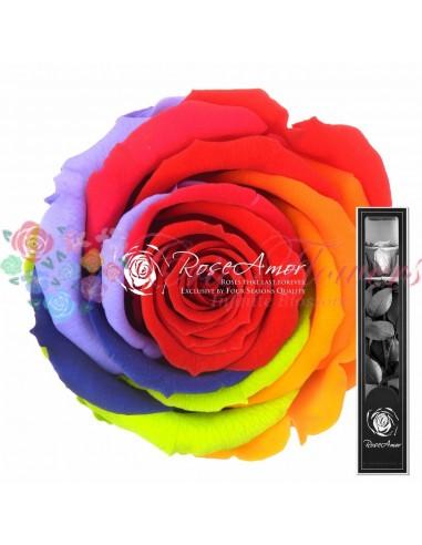 30cm Rainbow Red02