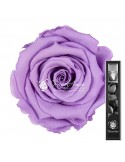 Trandafir Criogenat Tija Lila Pal 30cmVio03