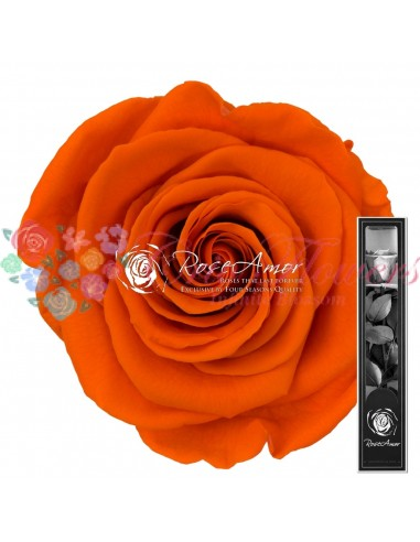 Trandafir Criogenat Tija Portocaliu 30cmOra02