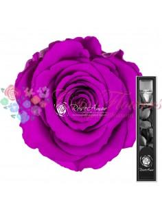 Trandafir Criogenat Tija Mov Intens 30cmPur02