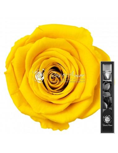Trandafir Criogenat Tija Galben 30cmYel02