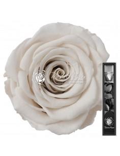 Trandafir Criogenat Tija Alb 30cmWhi04