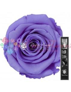 Trandafir Criogenat Tija Mov Deschis 30cmVio01