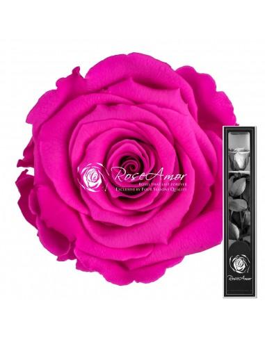 Trandafir Criogenat Tija Fucsia 30cmPin07