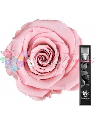 Trandafir Criogenat Tija Roz Pal 30cmPin04