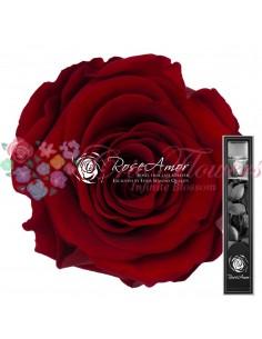 30cm Red01
