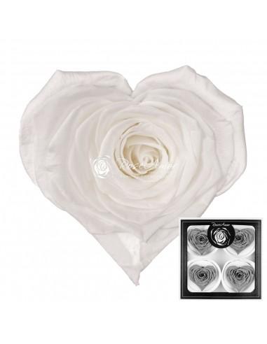 Trandafiri Criogenati Inima AlbPur CBellaWhi01