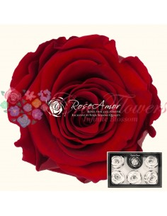Trandafiri Criogenati Rosu XLRed01