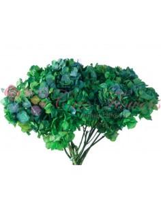 Hortensie Criogenata Bicolor Verde Albastru