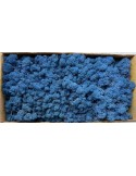 Licheni Curatati Albastru