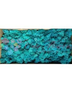 Licheni Curatati Turquoise