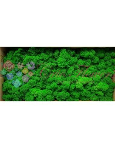 Licheni Curatati Brocoli