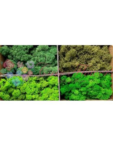 Licheni Curatati Mix4 Verde