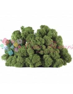 Licheni Scandinavia-500gr-Verde Iinchis