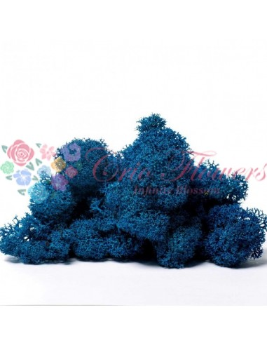 Licheni Scandinavia-500gr-Albastru