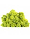 Licheni Scandinavia-Verde Lime-500gr