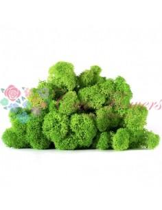 Licheni Scandinavia-500gr Verde Deschis/GrassGreen Light