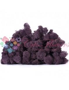 Licheni Scandinavia-500gr-Violet