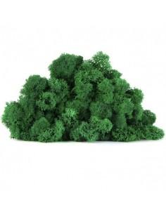 Licheni Scandinavia-500gr Verde/Moss Green