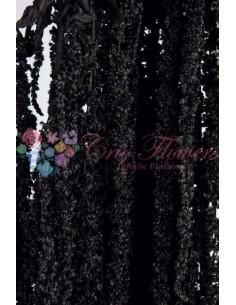 Amaranthus Criogenat Negru