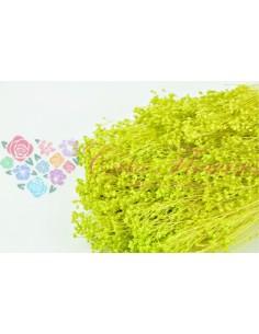 Broom Criogenat Verde Lime