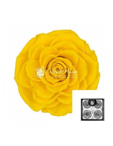 Trandafiri Criogenati Galben BellaYel02