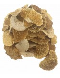 Ciuperci Decorative Sponge