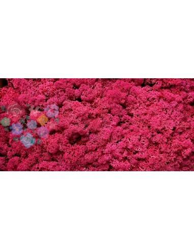 Licheni Curatati Roz